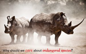 Why Should We Care About Endangered Species? 1
