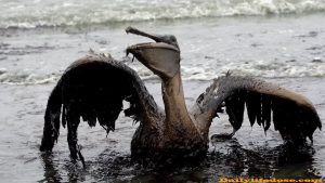Oil Spills Pollution
