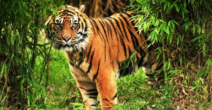 Sunderban National Park West Bengal