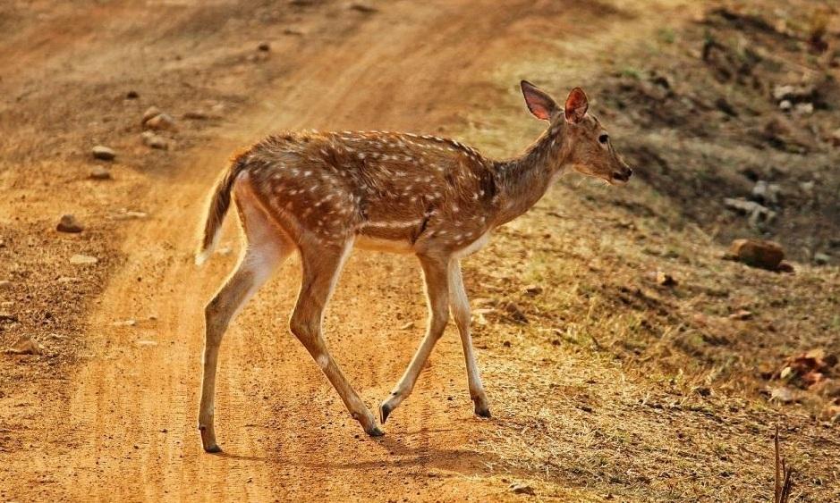 Best 12 Wildlife Jungle Safari in India 1